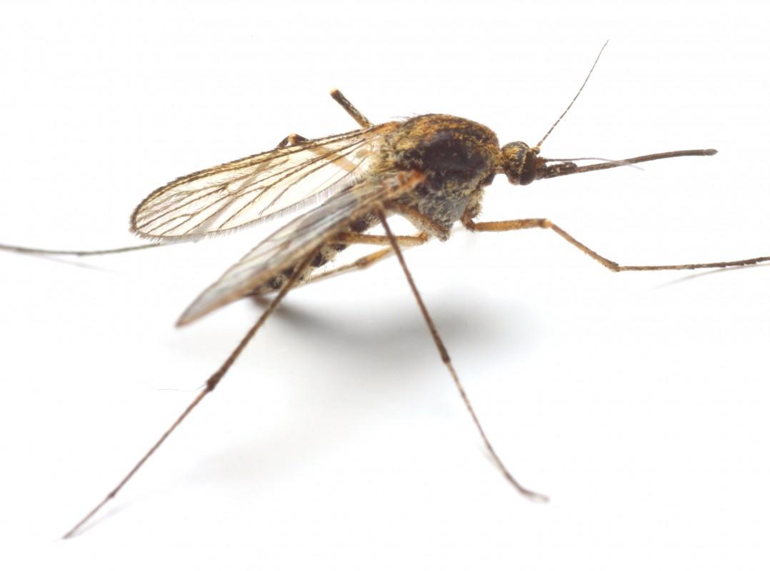 Awesome Backyard Mosquito Control