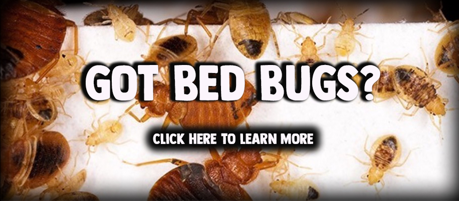 GOT_BedBugs_for_Website