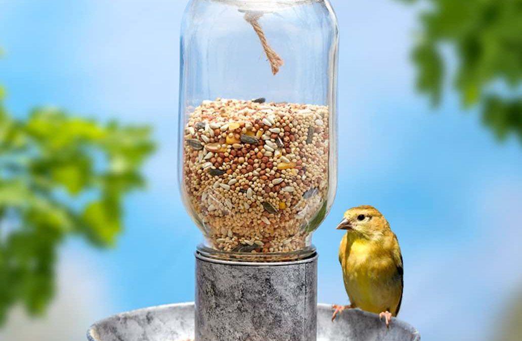 SQUIRREL PROOF Your BIRD FEEDER
